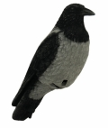 Live Crow Fullbody -variksen kuva