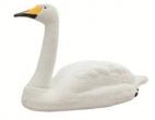 Live Swan- joutsenenkuva